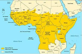 Summary of Yellow Fever Policy for South Africa (Updated