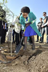 Minister Maite Nkoana-Mashabane plants a tree at the Diepsloot Combined School for Nelson Mandela Day, Diepsloot, South Africa, 22 July 2013.
